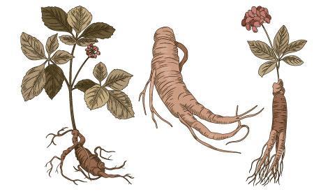 矮莖硃砂根